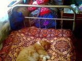 Schlafplatzwahl