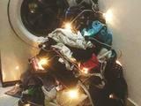Weihnachtsbaum für Mama