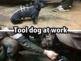 Tooldog
